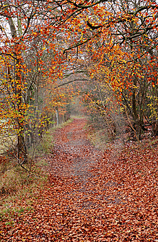 Late Autumn On An English Woodland Track Royalty Free Stock Photography - Image: 22127127