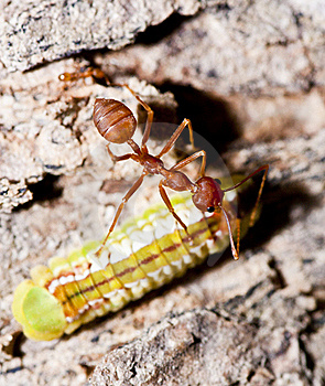 Ant And Worm Stock Photography - Image: 22141312