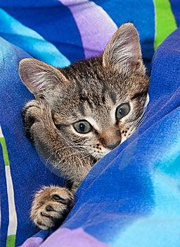 Sleepy Kitten Stock Images - Image: 22147554