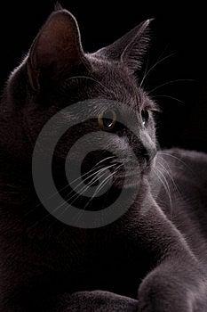 My Gray Kitty Stock Image - Image: 22161481