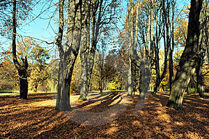 Autumn In The Mystery Park Royalty Free Stock Images - Image: 22161589