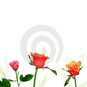 Kleurrijke Rozen Op Witte Achtergrond Royalty-vrije Stock Foto - Afbeelding: 22172075