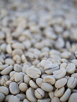 Raw Coffee Bean Stock Image - Image: 22189281
