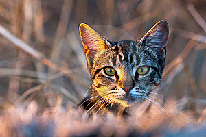 Hidden Cat Royalty Free Stock Images - Image: 22194869