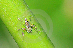 A Spider On A Green Plant Royalty Free Stock Image - Image: 22208156