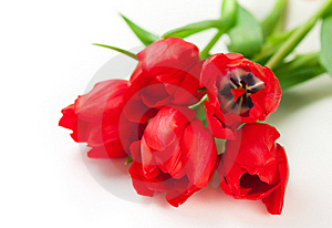 Red Tulips Royalty Free Stock Photo - Image: 22288555