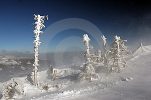 Frozen Broken Trees Stock Photo - Image: 2232430