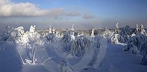Frozen Trees Royalty Free Stock Photo - Image: 2232505