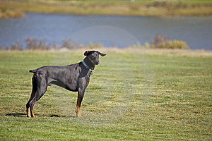 Dog Attention Royalty Free Stock Photography - Image: 22300877