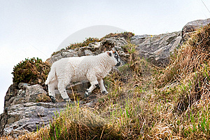 Sheep On A Hill Royalty Free Stock Photography - Image: 22305597