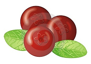 Cowberry Stock Photography - Image: 22339642
