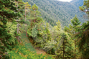 Alpine Forest Royalty Free Stock Photos - Image: 22358548
