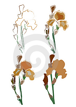 Irises Royalty Free Stock Images - Image: 22383889