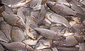 Small Fish Stock Images - Image: 22389594