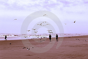 Boys And Birds 2 Stock Images - Image: 2246984