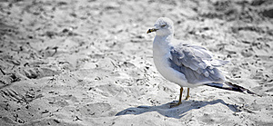 Seagull Stock Photography - Image: 22405622
