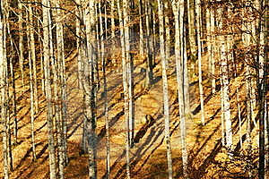 Forest In Autumn Royalty Free Stock Photography - Image: 22430367