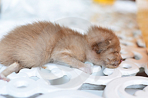 Cute Sleeping Kitten Cat Royalty Free Stock Photos - Image: 22430478