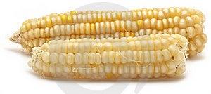 Corn Royalty Free Stock Photo - Image: 22446875