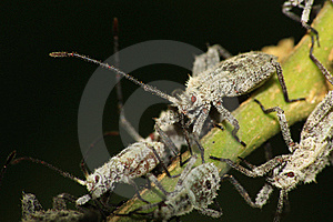 Furry Shield Bug Stock Images - Image: 22449624
