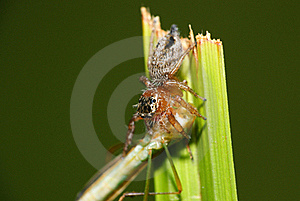 Spider Eats Shield Bug Stock Photos - Image: 22449663