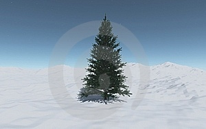 A Single  Spruce Among The Snow Hills Royalty Free Stock Images - Image: 22456959