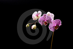 Purple Orchid Stock Photos - Image: 22461713