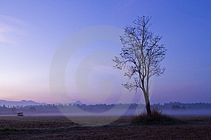Tree In Fog Stock Images - Image: 22467024