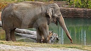 Elephant Royalty Free Stock Images - Image: 22471909