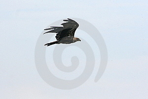 Predatore Fotografia Stock - Immagine: 22473532