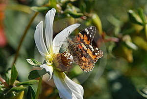Butterfly Royalty Free Stock Photography - Image: 22508677