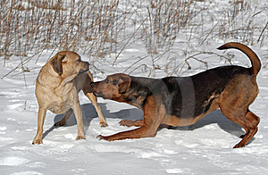 Let's Play! Royalty Free Stock Image - Image: 22539256