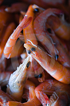 Shrimps Royalty Free Stock Photo - Image: 22553175