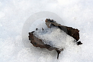 Buried Under The Snow Royalty Free Stock Image - Image: 22559506