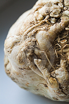 Celery Root Stock Image - Image: 22569961