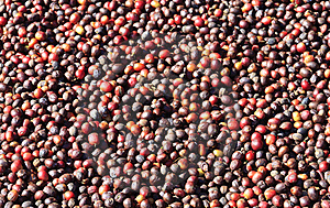 Coffee Beans Stock Image - Image: 22576311