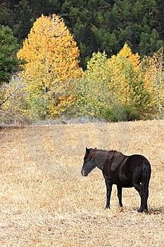 A Horse In The Village Near Midui Glacier Stock Photos - Image: 22580513