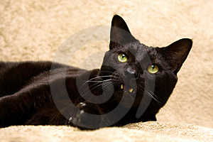 Black Cat With Mouth Open Royalty Free Stock Image - Image: 2261016