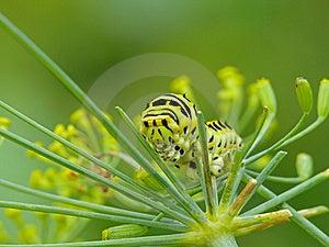 Caterpillar Royalty Free Stock Photography - Image: 22611777