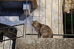 Blinded Cat On The Balustrade Stock Images - Image: 22618174