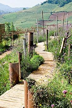 Walkway Made of Bamboo. Royalty Free Stock Image - Image: 22620226