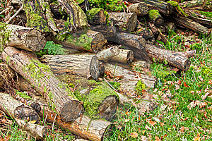 Forest Logs Royalty Free Stock Photography - Image: 22624897