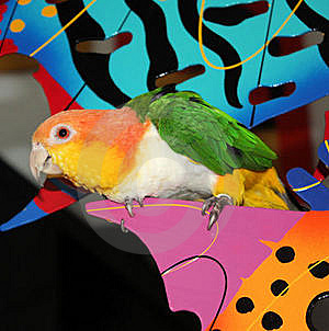 Parrot Perched Royalty Free Stock Photography - Image: 22625537