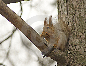 Squirrel. Royalty Free Stock Images - Image: 22628609
