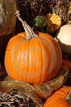 Plump Orange Pumpkin On Display Royalty Free Stock Image - Image: 22631306