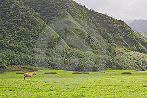 White Stallion In Green Field Royalty Free Stock Photo - Image: 22633195