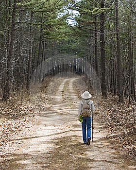 A Hike Through The Pine Trees. Stock Image - Image: 22640311
