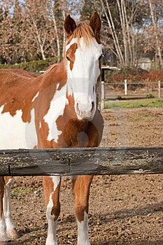 Spanish Horse Stock Photo - Image: 22658420