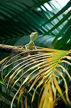 ящерица одичалая Стоковая Фотография - изображение: 22676242
