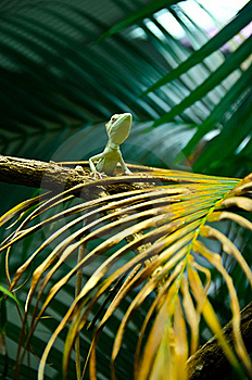 Wild Lizard Stock Photography - Image: 22676242